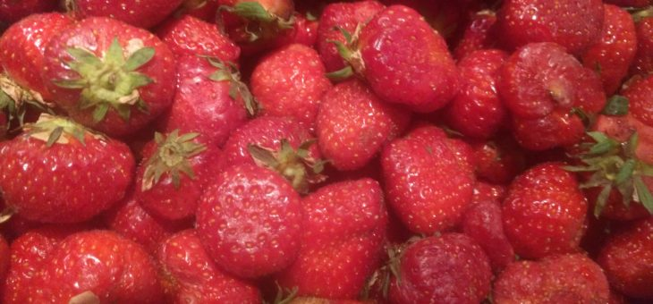 Heel veel aardbeien. En kaas