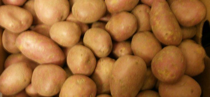 Voorraad Aardappelen